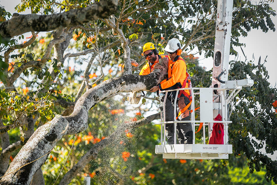 Independent-Tree-Services