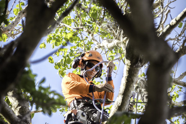 Independent Tree Services_2017_3