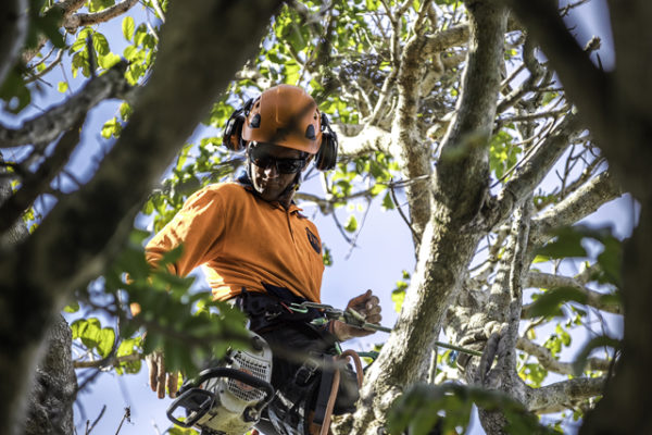 Independent Tree Services_2017_4