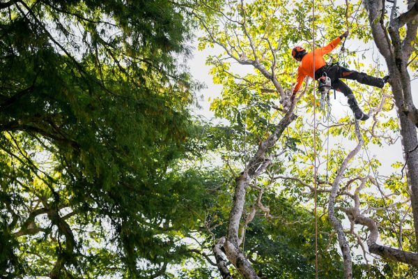 2_Independent-Tree-Services_2017_22