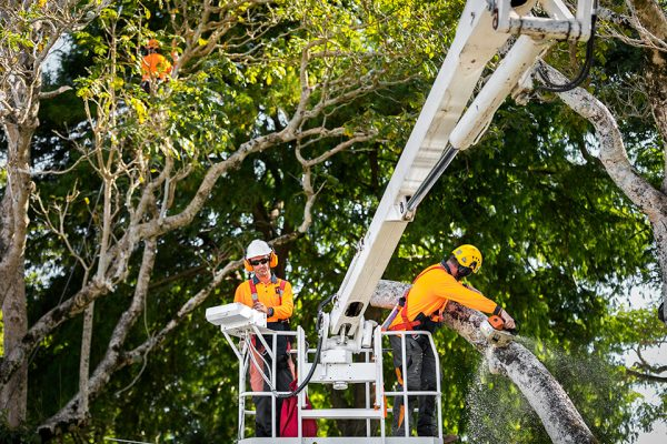 3_Independent-Tree-Services_2017_29