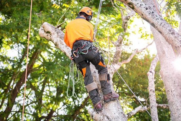Independent-Tree-Services_2017_20_Resized